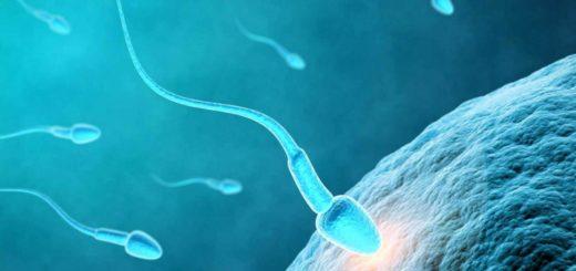Recette naturelle à base Adénia Lobata pour augmenter le nombre de spermatozoïdes