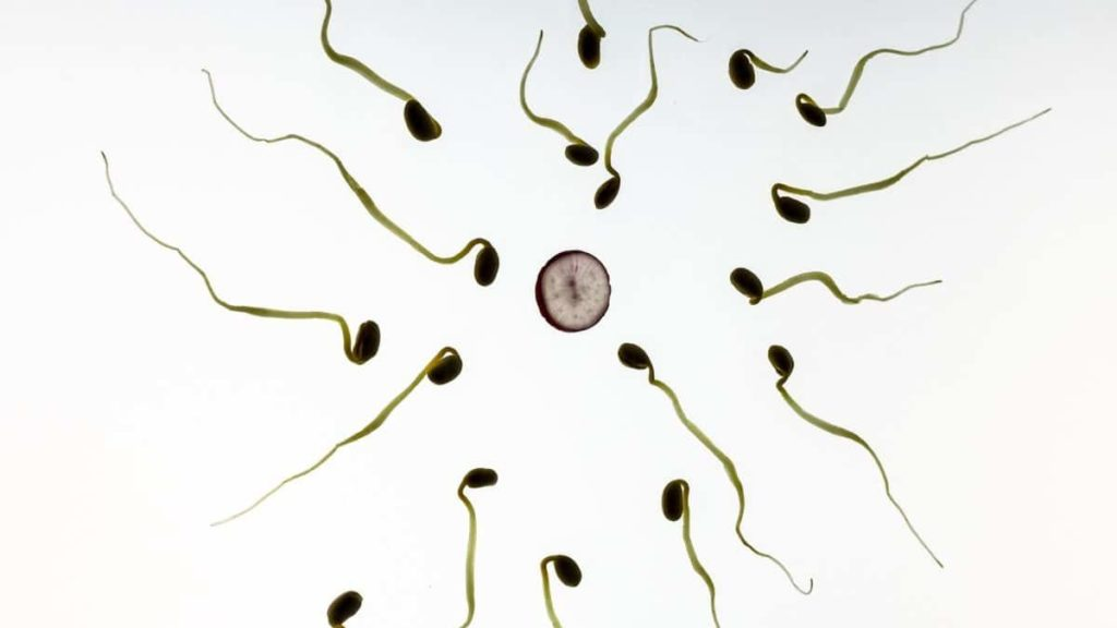 Définition de l'oligospermie