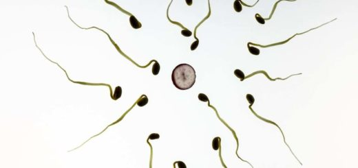 Guérir naturellement de l'oligospermie