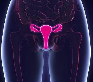 Fibromes et myomes : causes et symptômes