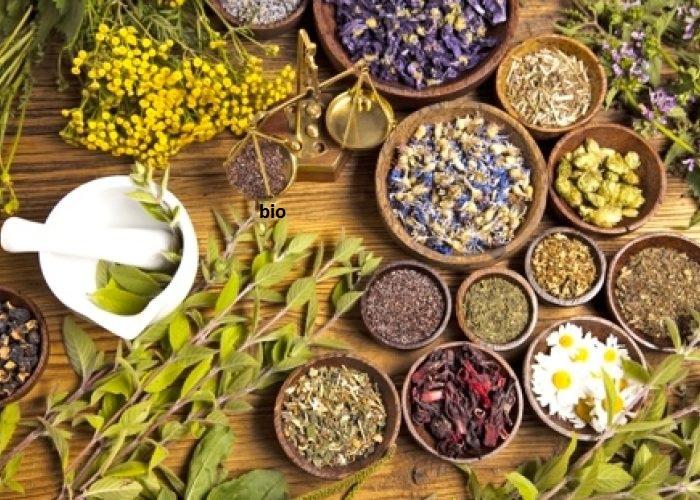 plantes africaines pour soigner les fibromes