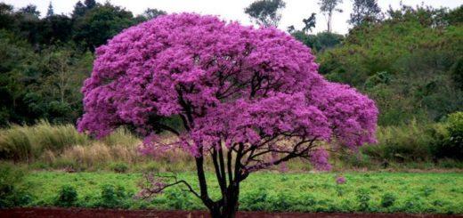 Les plantes médicinales de l'Équateur
