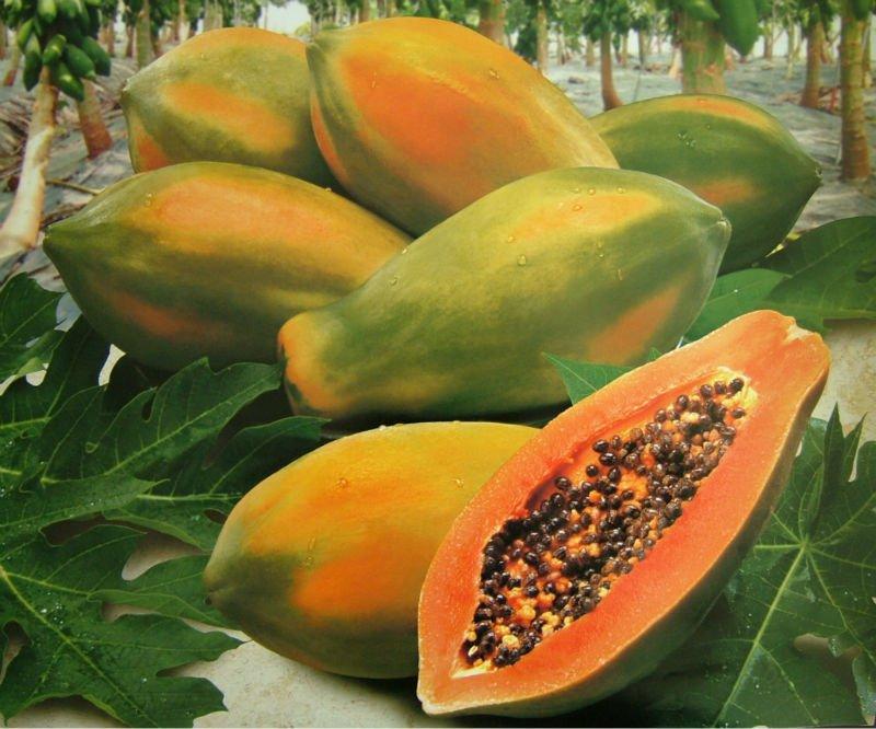 Les bienfaits et vertus du papayer sur la santé