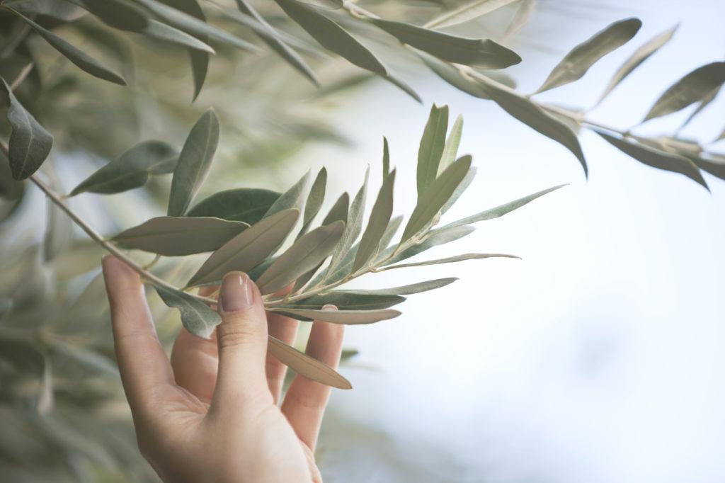 Les recettes naturelles à base de plantes contre la fragilité sexuelle