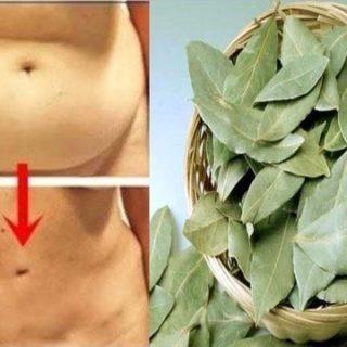 Comment utiliser les feuilles de laurier pour maigrir
